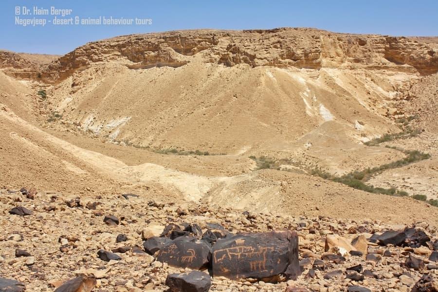 מסלולים בדרום - ציורי סלע נגב. צילום - חיים ברגר